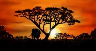 aurora in africa